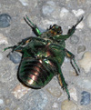 Insect2_3